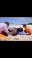 爱玩的大块头!当小朋友把大鲨鱼埋在沙子里